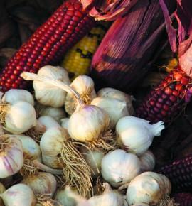 7th Annual ¡Sostenga! Garlic Festival