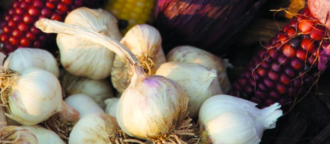 7th Annual ¡Sostenga! Garlic Festival